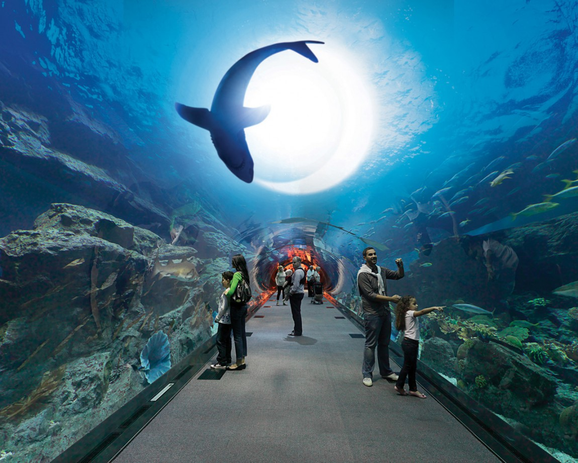 Dubai-Mall-Aquarium-Diving-HD-Wallpaper